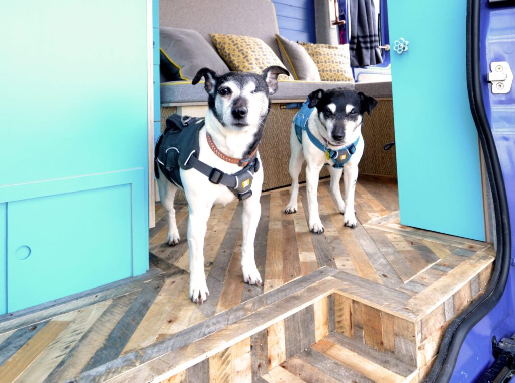 dog friendly campervans with quirky campers
