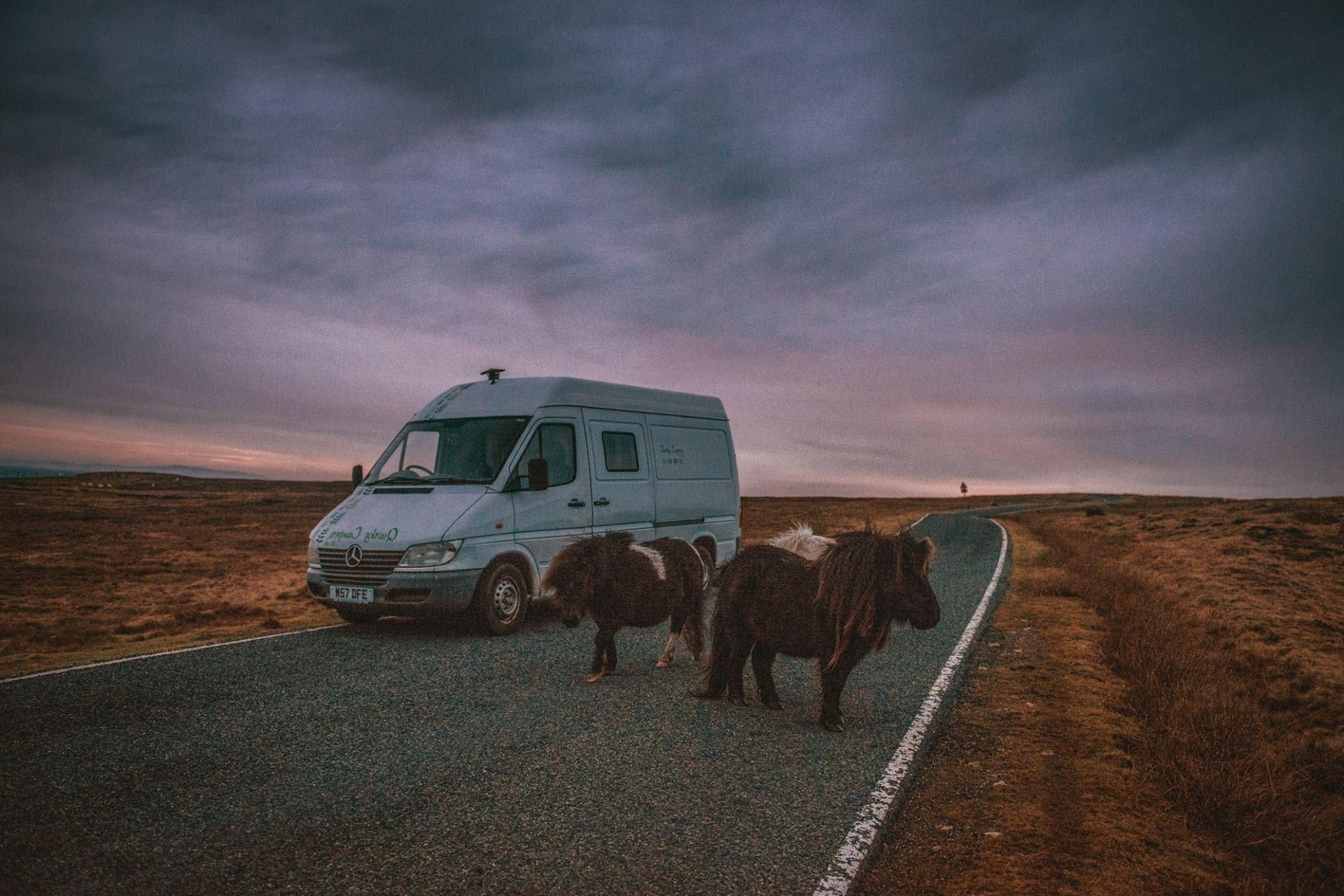 Horses in Ireland by a handmade selfbuilt Mercedes Campervan
