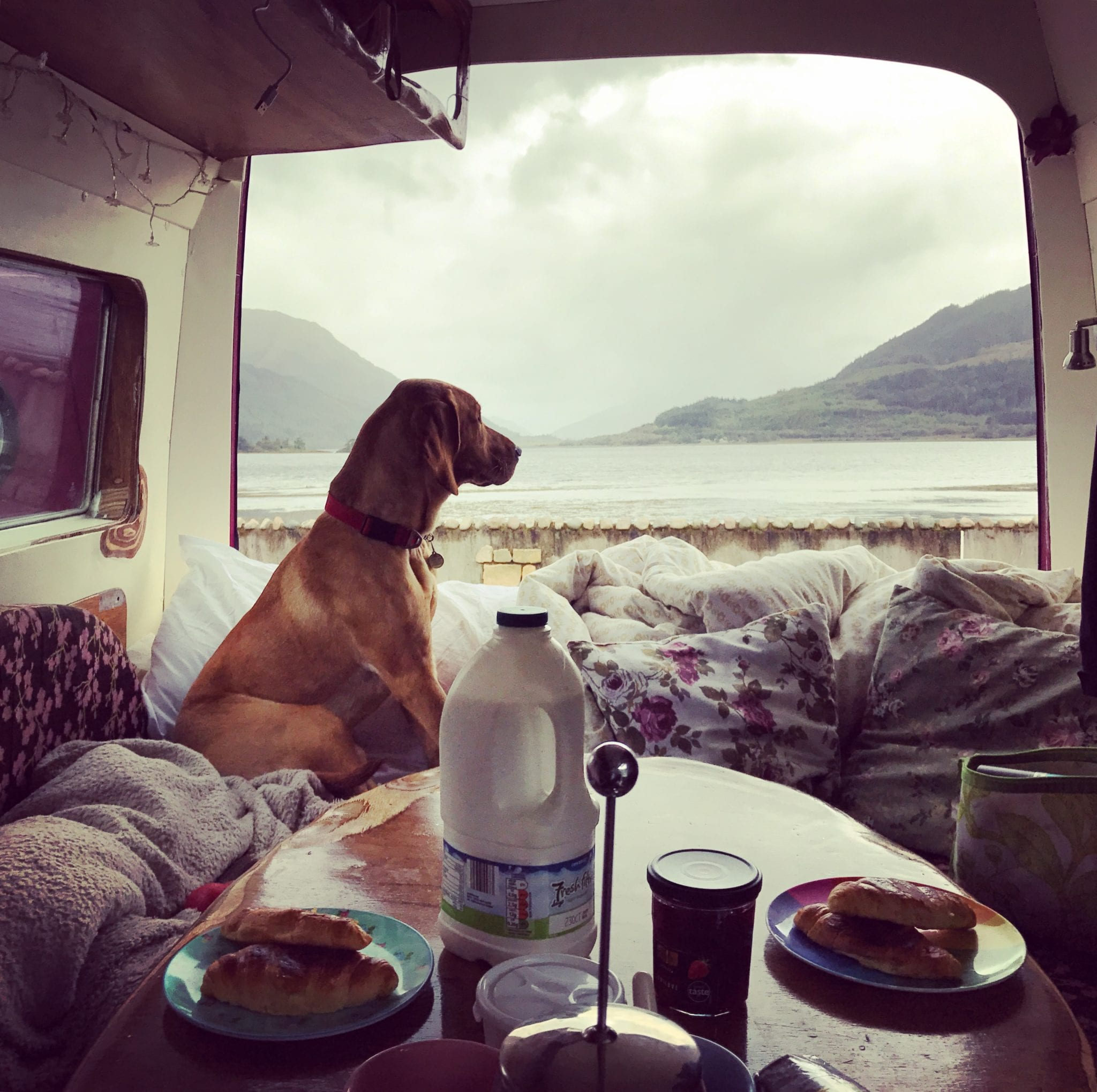 A dog sat on a bed campervan bed looking out onto a lake with breakfast on the table