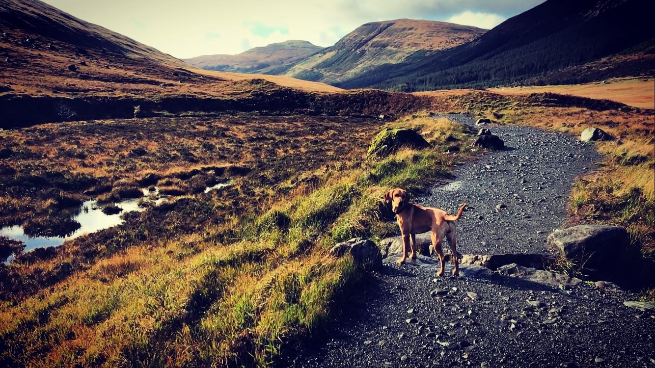 A dog on a walking track in the mountains