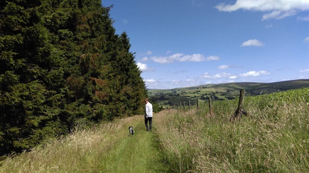 Dog walking in mid wales on the edge of the forest