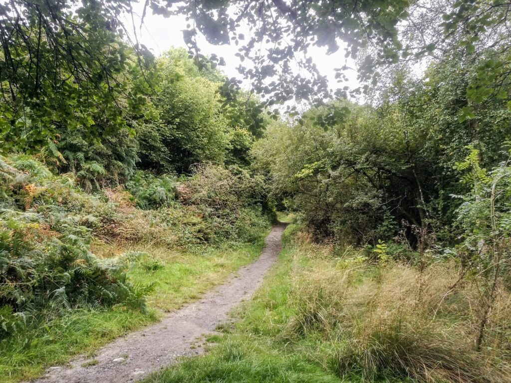 a woodland path in mid wales surrounded by trees