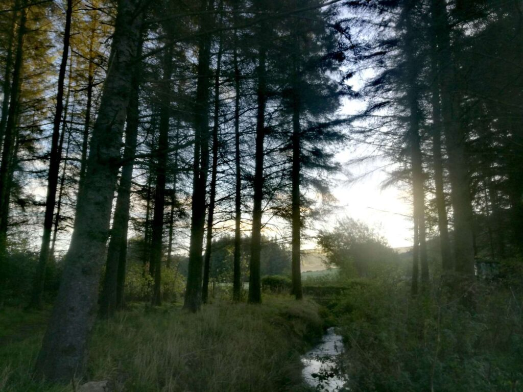 trees in a wood with a stream with the sun peaking through