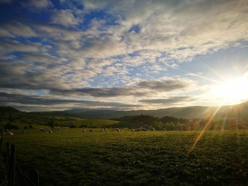 a field with sheep in mid wales with the sun striking through the clouds and blue sky