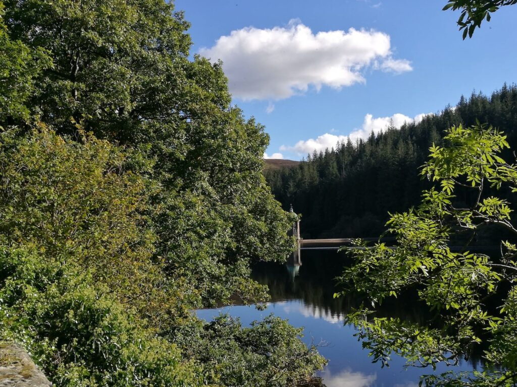 Trees overhanging the water in a lake with a blue sky