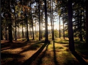 Cannock Chase. A orested area with the sun glistening through the trees and blue sky